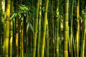 Bambu Tanaman Sejuta Manfaat